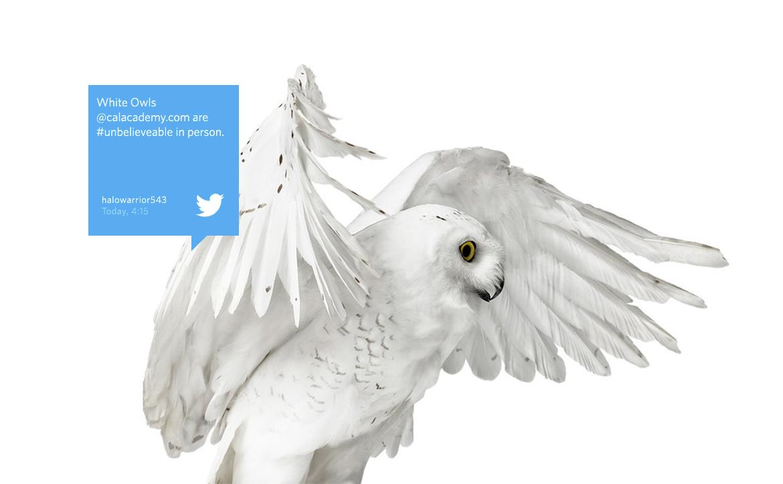 project-cas-website-owl